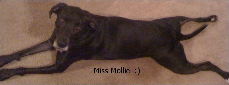 Miss Mollie
